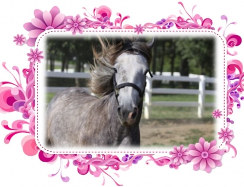 The Dance! From Foal to Playful Youth!